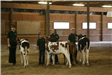 Three competitors at the cow show